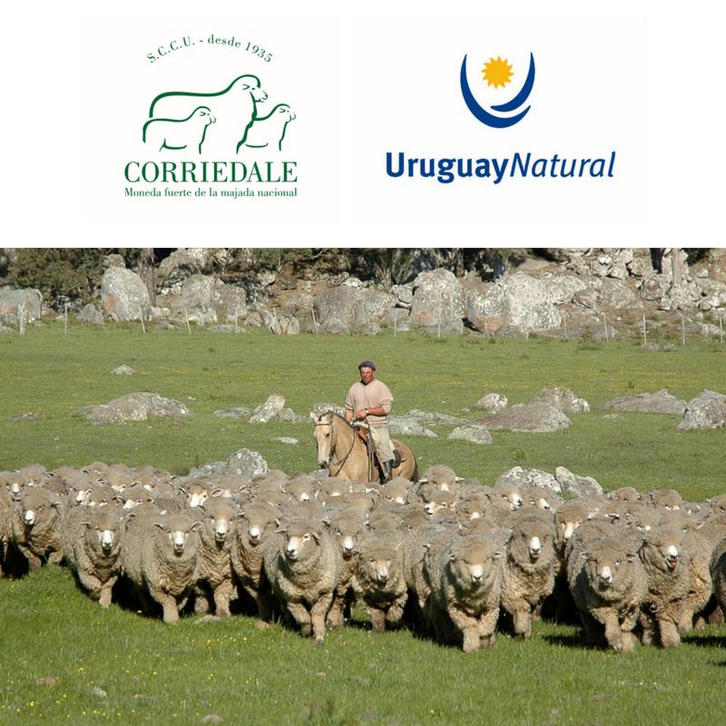 corriedale-es-uruguay-natural