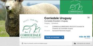 Corriedale Uruguay, esta en linkedin!