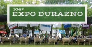 Corriedale presente en la 104º Expo Durazno