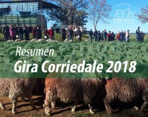 Resumen gira Corriedale 2018